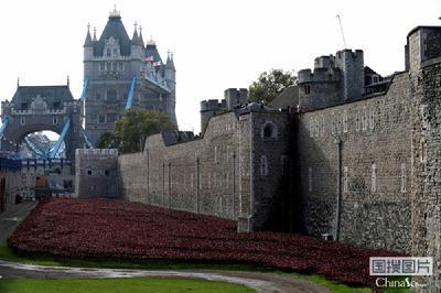 这是10月22日在英国伦敦的伦敦塔拍摄的陶瓷罂粟花